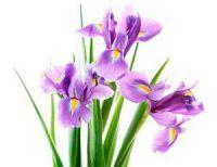 Pflanzen und Blumen der Trauerfloristik